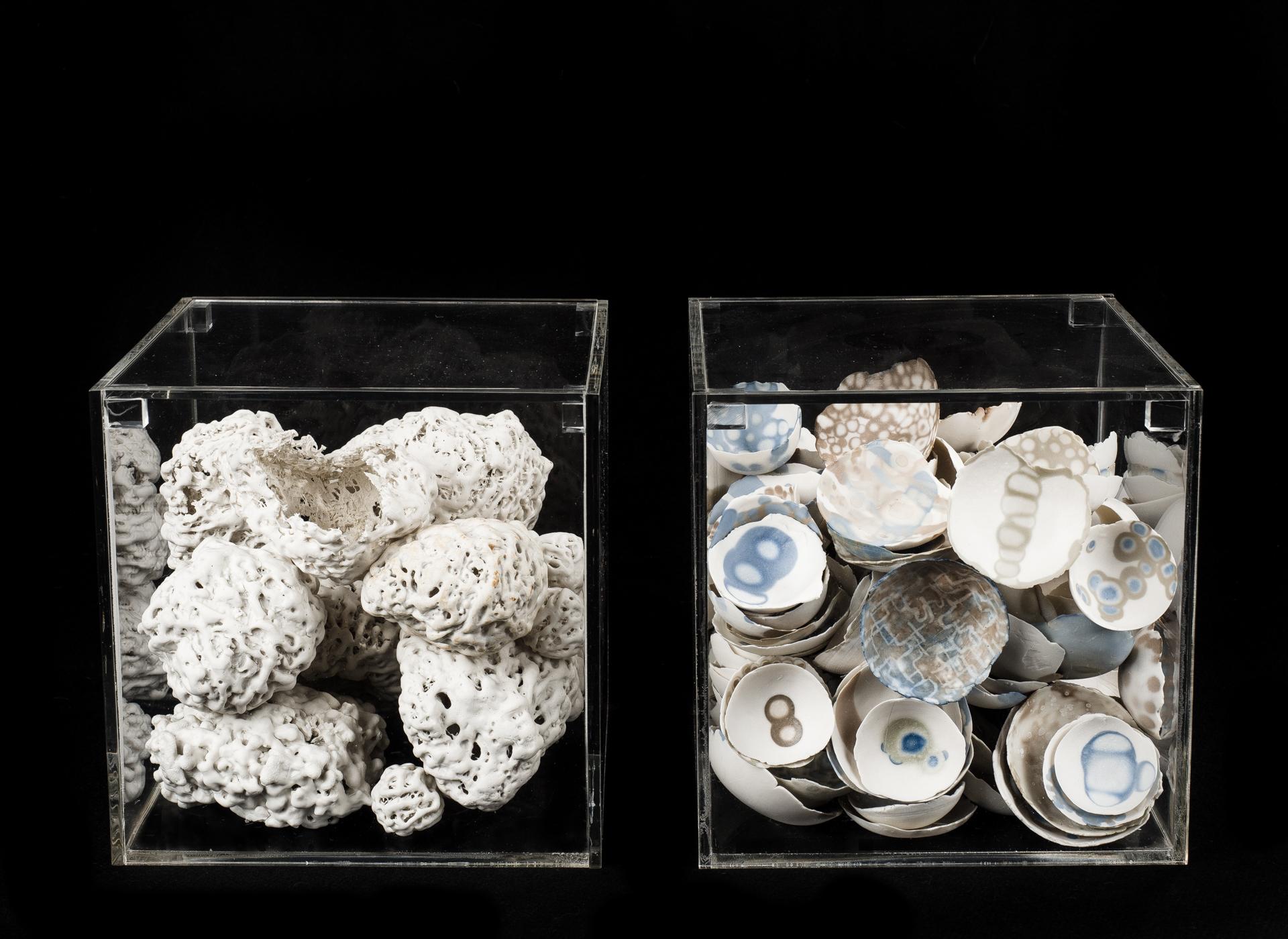 Porcellana, sali metallici, fibre vegetali, plexiglass - 2017